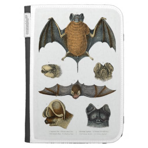 19th C. Bat Print Case For The Kindle