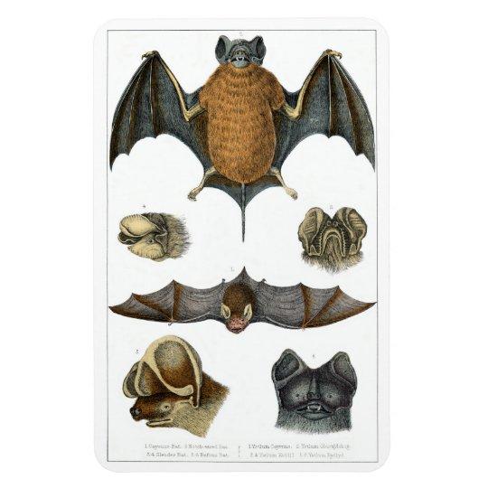 19th C. Bat Print Magnet