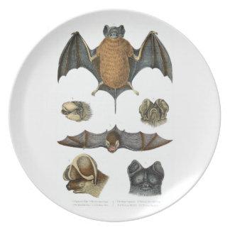 19th C. Bat Print Melamine Plate
