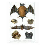 19th C. Bat Print Post Cards