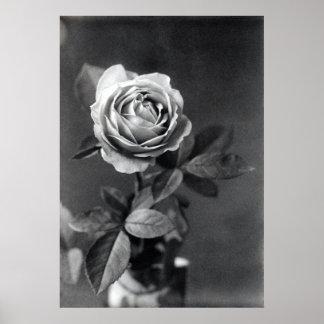 19th C. Rose Print