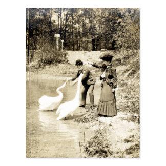19th C. Swans in Paris Postcard