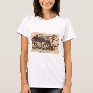 19th century farm animal print pigs T-Shirt