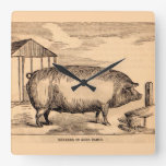 19th century pig print 'Breeder in Good Flesh' Square Wall Clock