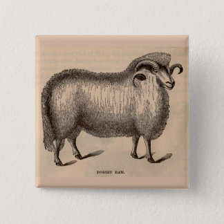 19th century print Dorset ram Pinback Button