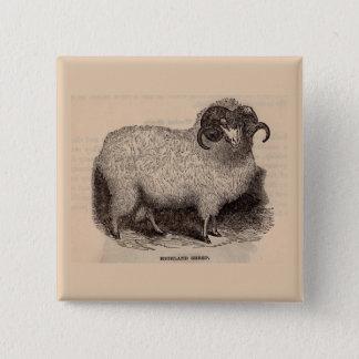 19th century print Highland sheep Pinback Button