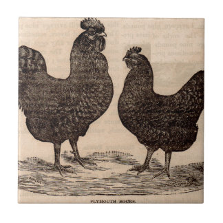19th century print Plymouth Rock hen and rooster Ceramic Tile