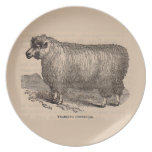 19th century print yearling Cotswold sheep Dinner Plate