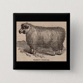 19th century print yearling Cotswold sheep Pinback Button