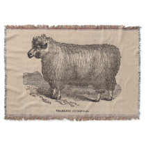 19th century print yearling Cotswold sheep Throw
