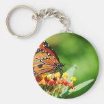 1-backyard-butterflies-10-12-091.jpg llaveros