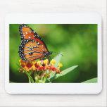 1-backyard-butterflies-10-12-091.jpg tapete de ratón