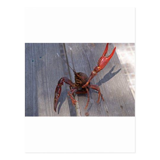 1 crawfish postcard