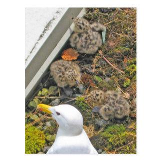 1 postal vieja de los polluelos de la gaviota del