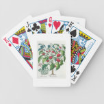 1.Solanum Pomiferum; 2.Amaracus vulgaris, from the Bicycle Playing Cards