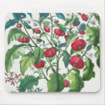 1.Solanum Pomiferum; 2.Amaracus vulgaris, from the Mouse Pad