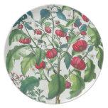 1.Solanum Pomiferum; 2.Amaracus vulgaris, from the Plate