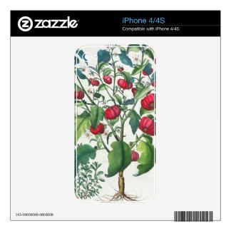 1.Solanum Pomiferum; 2.Amaracus vulgaris, from the Decal For iPhone 4