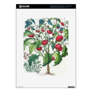 1.Solanum Pomiferum; 2.Amaracus vulgaris, from the Decals For iPad 3