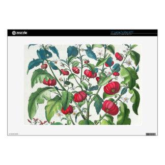 """1.Solanum Pomiferum; 2.Amaracus vulgaris, from the Decal For 15"""" Laptop"""