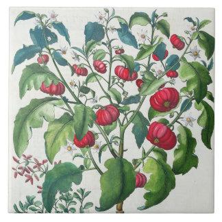 1.Solanum Pomiferum; 2.Amaracus vulgaris, from the Tile
