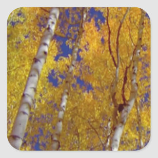1 temp sq fall season square sticker