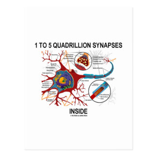 1 To 5 Quadrillion Synapses Inside (Neuron) Post Cards