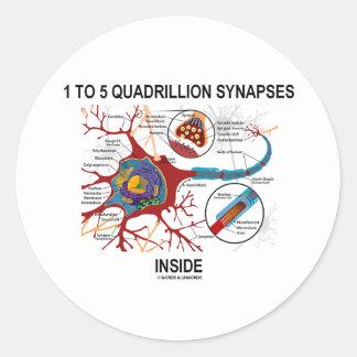 1 To 5 Quadrillion Synapses Inside (Neuron) Stickers