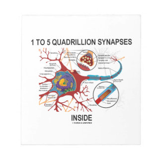 1 To 5 Quadrillion Synapses Inside Neuron Synapse Memo Pad