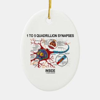 1 To 5 Quadrillion Synapses Inside Neuron Synapse Ornaments