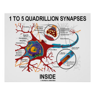 1 To 5 Quadrillion Synapses Inside Neuron Synapse Posters