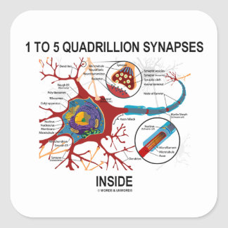 1 To 5 Quadrillion Synapses Inside Neuron Synapse Square Sticker
