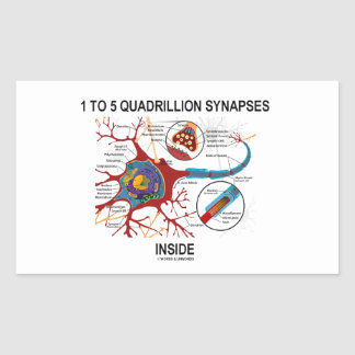 1 To 5 Quadrillion Synapses Inside Neuron Synapse Sticker