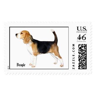1Fergie-c beagle