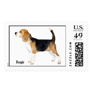 1Fergie-c, beagle Sellos