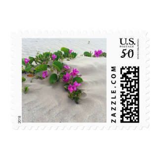 1st class stamp, Beach Morning Glory Postage