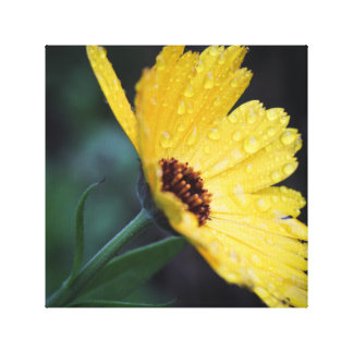 1x1 Collection, Flower in the Rain Canvas Print