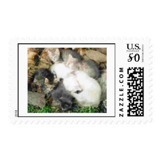 2004 kittens postage