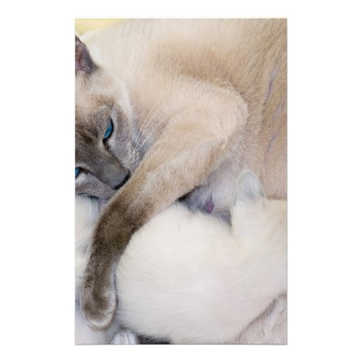 2007 07 06 gatos 005_edited-1  papeleria de diseño