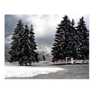2008 NY Ice Storm Postcard