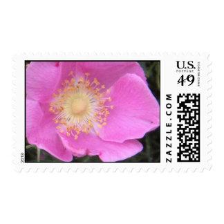 2009-1018 sello