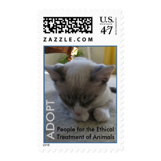 2010 Cutest Cat Contest Winner Postage