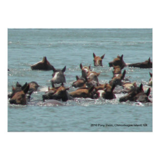2010 Pony Swim, Chincoteague Island, VA Poster