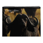 2011 Calendars African animals- Huge size