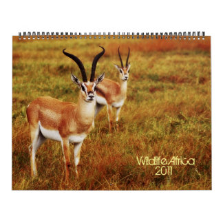 2011 Calendars - Wildlife Africa - Huge size