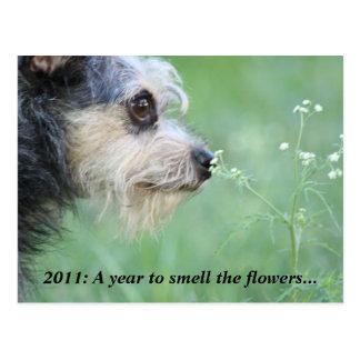 2011 haga la hora de gozar del calendario del año  tarjeta postal
