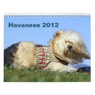 2012 Calendar to benefit Havanese rescue