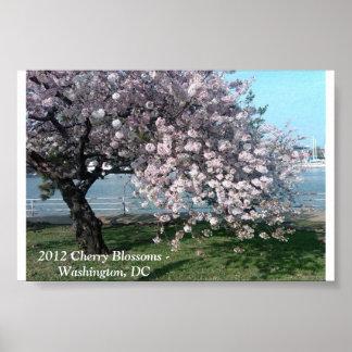 2012 flores de cerezo póster