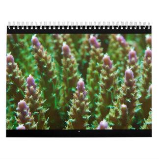 2012 Reef Serenity Calendar