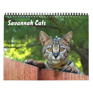 2012 Serval Savannah Cat Calendar